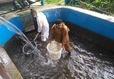 Transfer of knowledge - based products of the macro project of Specific Pathogen Free (SPF) rainbow trout production in the country